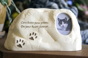 KittyPawprintRock
