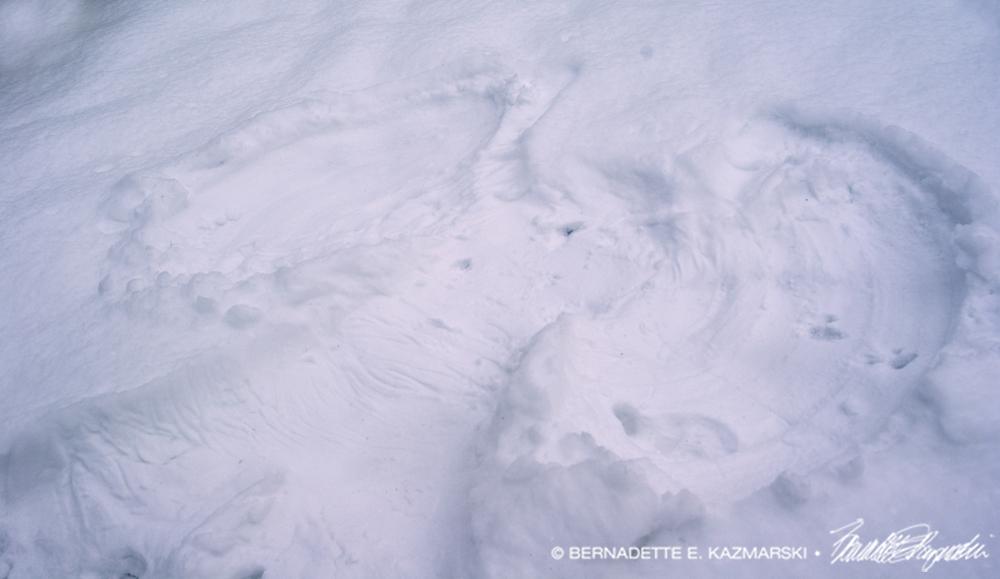 snow-angel-2-1000px