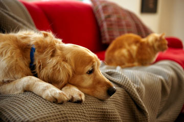 Pets alone